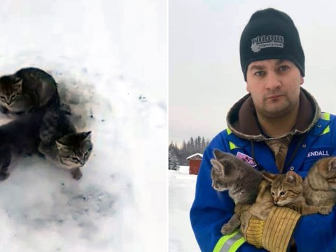 Man rescues kittens with tails frozen into the snow with his hot coffee
