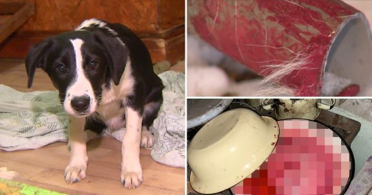 Stray dog eaten by new owner