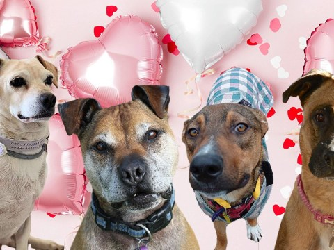 Lonely dogs 'write' Valentine's letters asking people to love and adopt them