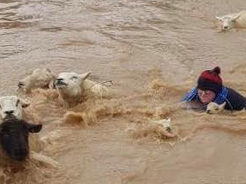 Moment farmer jumps into flood waters to save lambs and sheep in Storm Dennis