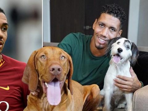 England star Chris Smalling heartbroken after beloved dog dies in 'suspected poisoning'