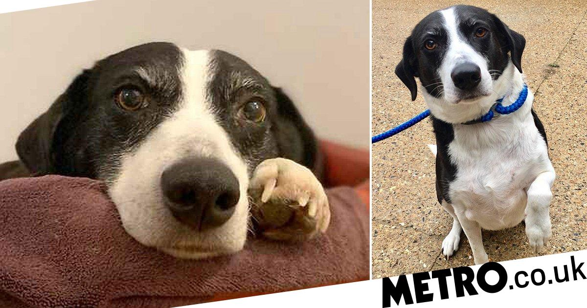 Britain's loneliest dog is holding auditions for owners after 10 years in shelter
