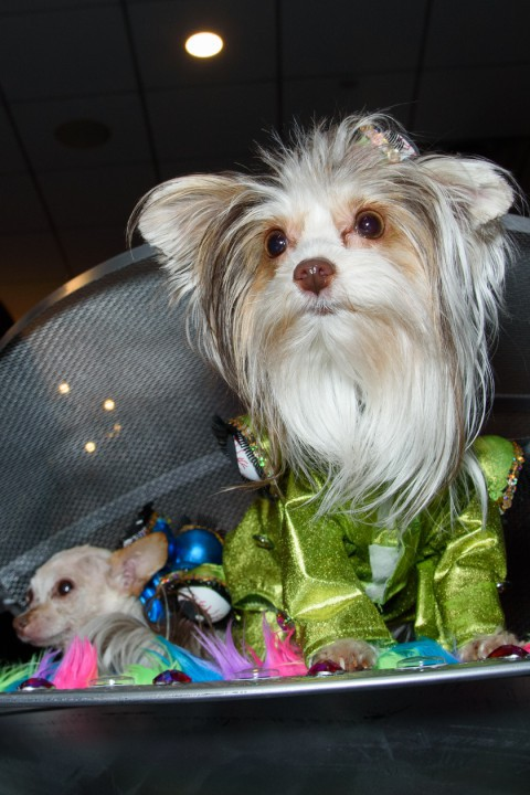 A dog wearing a green outfit at the New York Pet Fashion Show