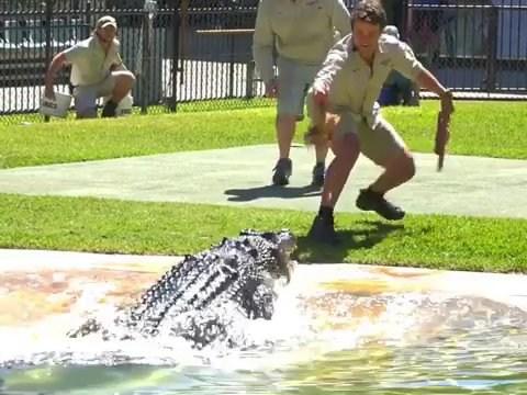 Bindi Irwin's fiancé Chandler Powell did not 'take a tumble' near aggressive crocodile