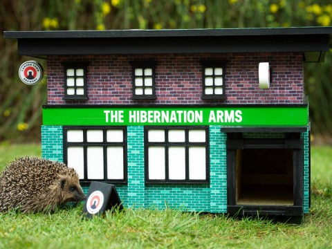Camden Town Brewery creates miniature pubs for hedgehogs to hibernate in this winter