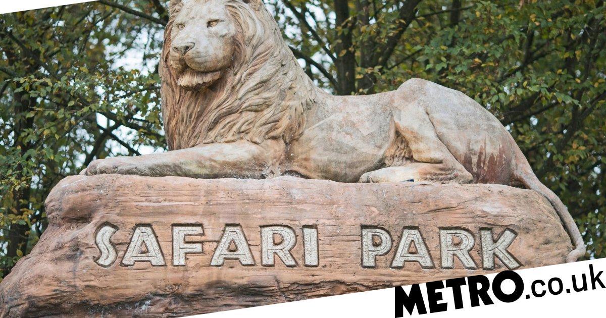Pack of wild dogs escape safari park and go on killing spree