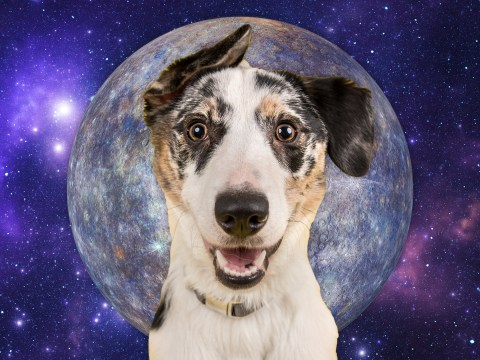 A third of UK pet owners think their dog or cat acts differently during Mercury Retrograde