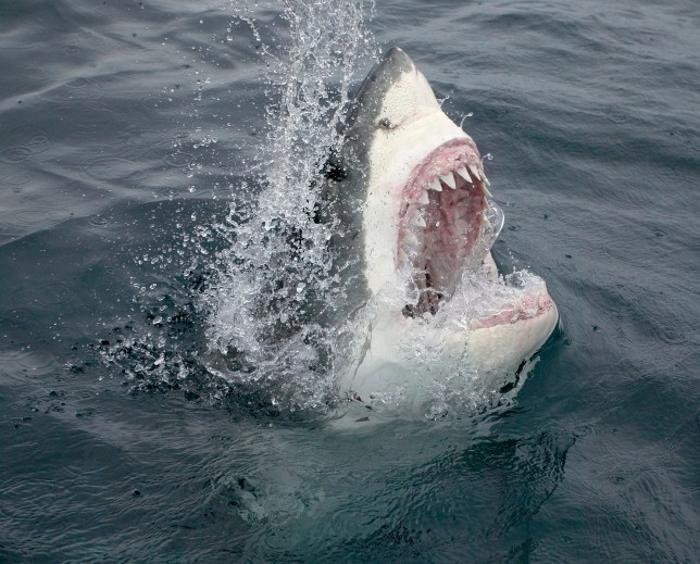 He remembered advice to punch sharks in the face during an attack