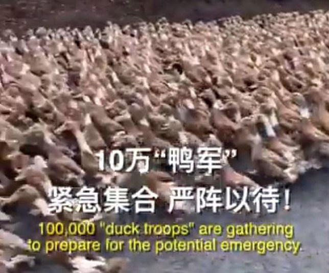 China to dispatch 'duck army' to Pakistan to devour locust swarm, paper reports Picture: @CGTNOfficial METROGRAB
