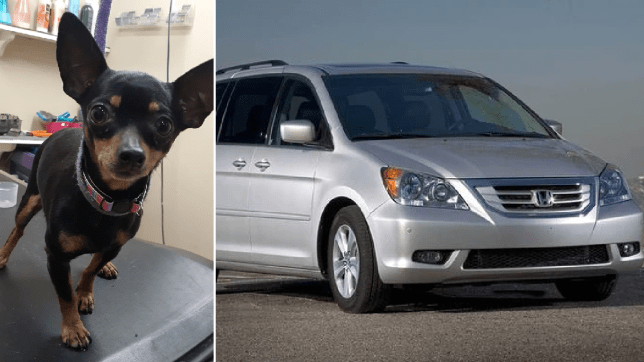 Photo of surviving Chihuahua next to file photo of Honda Odyssey