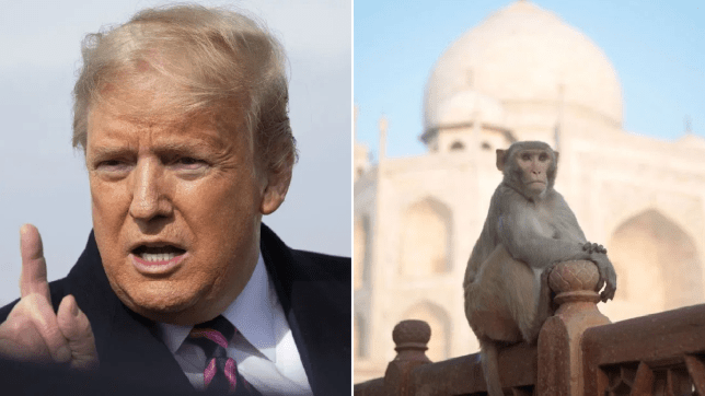 Photo of Donald Trump next to photo of monkey at Taj Mahal