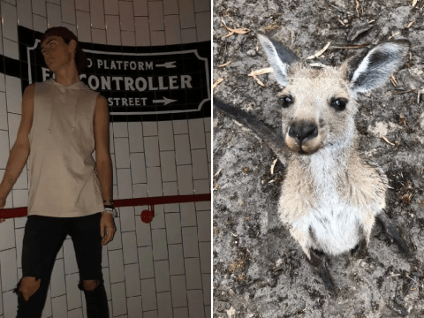 Man gets supremely drunk on New Year's Eve and adopts a kangaroo but only realises after weeks of $5 donations