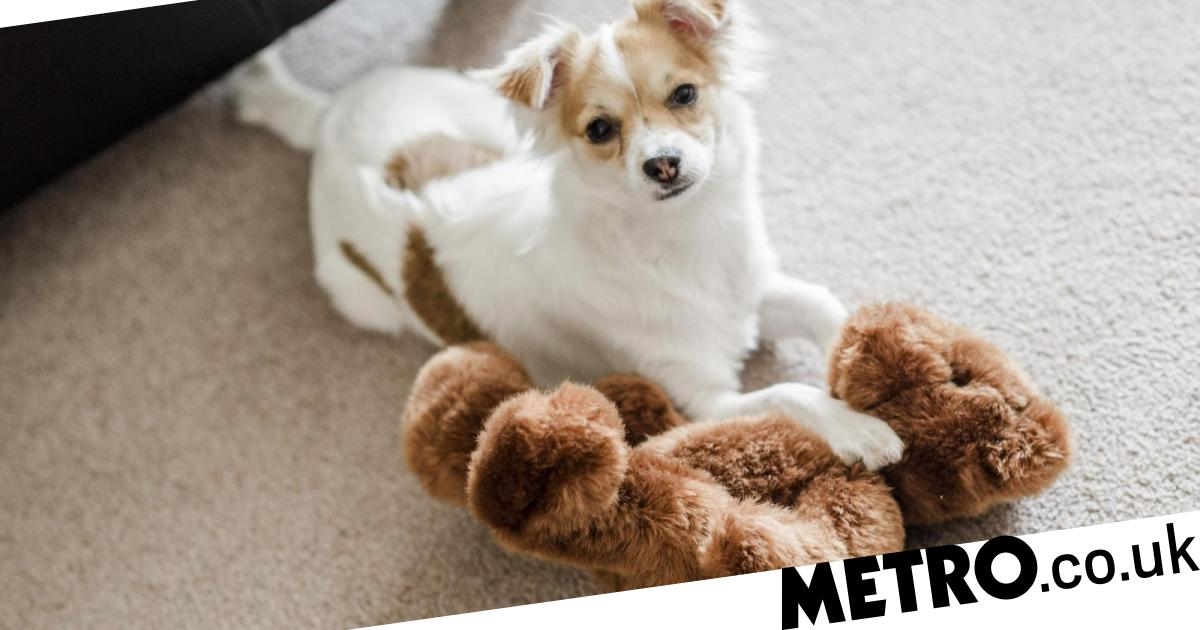 Don't spoil your dog during self-isolation, says scientist