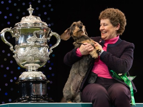 Crufts 2020: Who was the Best In Show winner and how much money do they get?