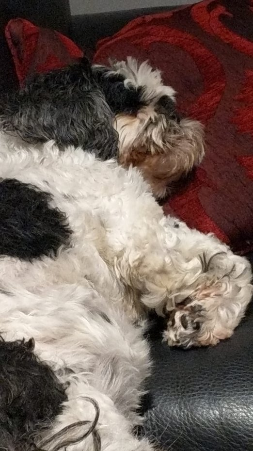Tali Osen's dog Maisie is another afternoon nap fan