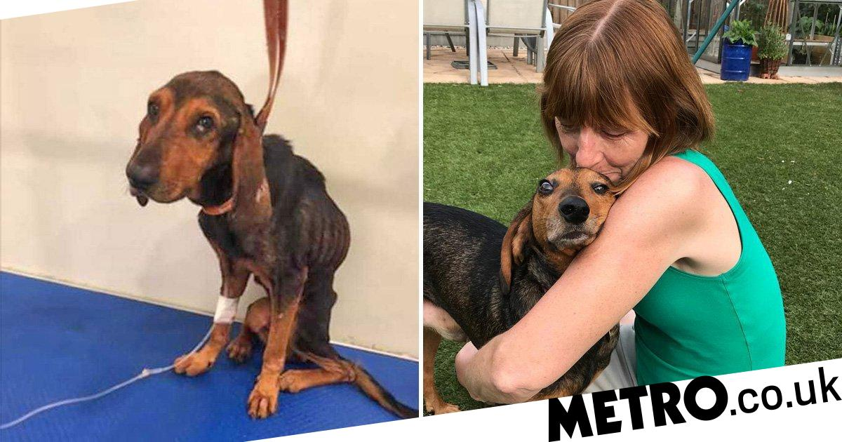 Dog found with broken ribs and kneecaps sniffs out owner's cancer