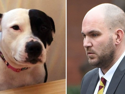 Dog had to be put down after being traumatised by domestic violence