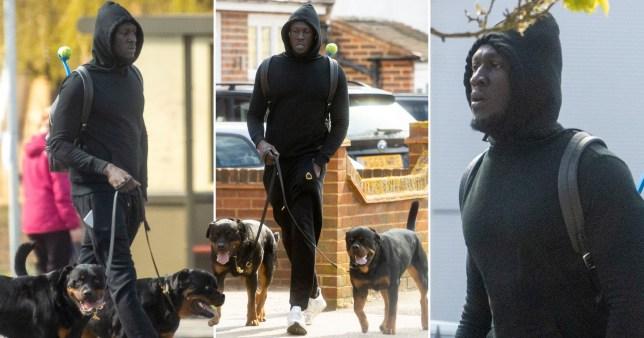 Stormzy walks dogs