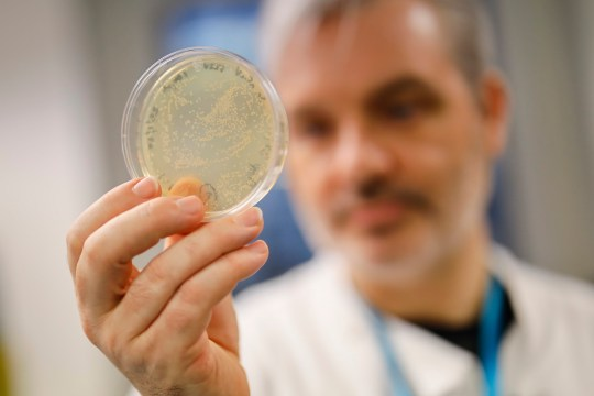 Doctor Paul McKay, who is working on an vaccine for the 2019-nCoV strain of the novel coronavirus, poses for a photograph with bacteria containing the coronavirus DNA, at Imperial College School of Medicine (ICSM) in London on February 10, 2020. - A team of UK scientists believe they are one of the first to start animal testing of a vaccine for the new coronavirus that has killed more than 1,000 people and spread around the world. (Photo by Tolga AKMEN / AFP) / TO GO WITH AFP STORY BY WILLIAM EDWARDS (Photo by TOLGA AKMEN/AFP via Getty Images)