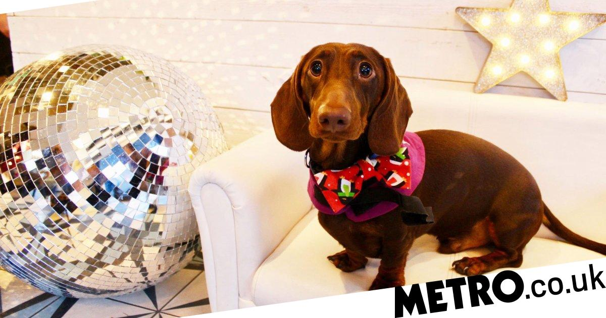 Rock out your dancing shoes, a sausage dog disco is coming to London
