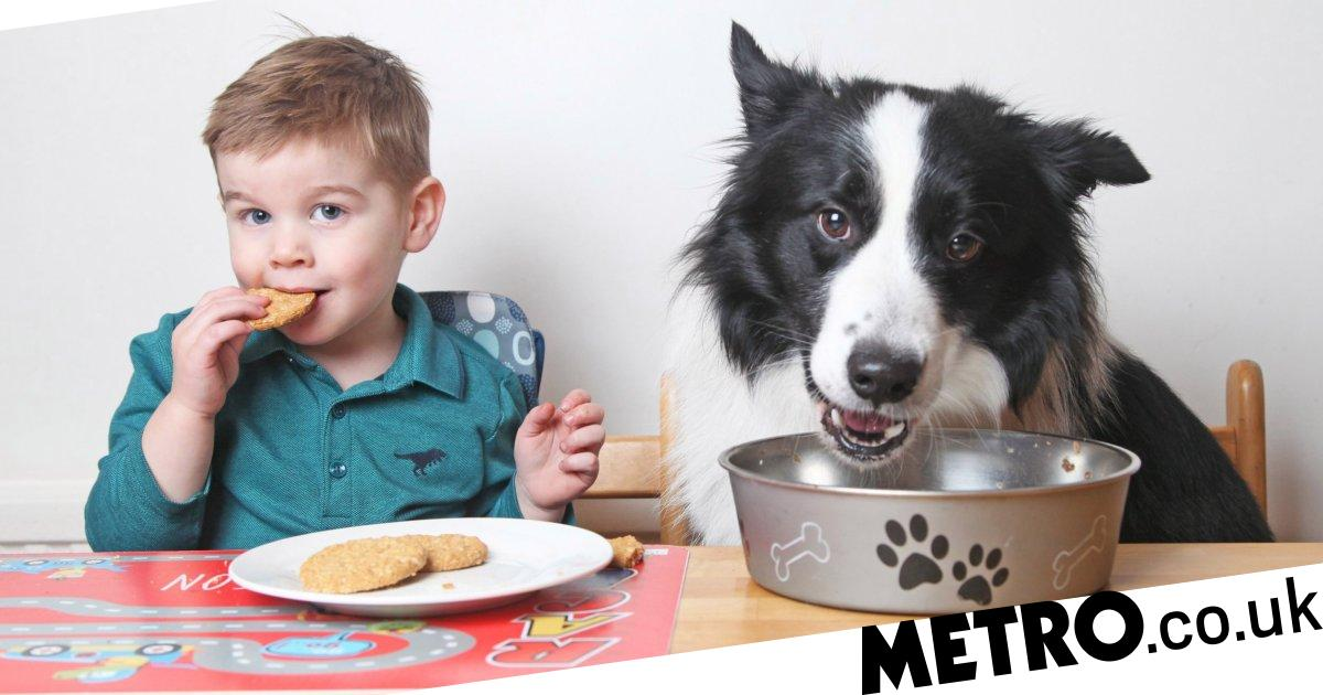 Two-year-old boy loves his dog so much he thinks they're brothers
