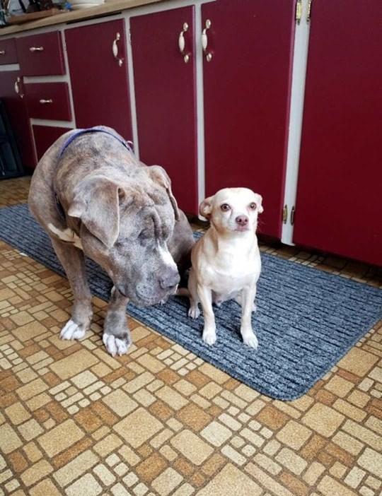 Blind dog named Devito