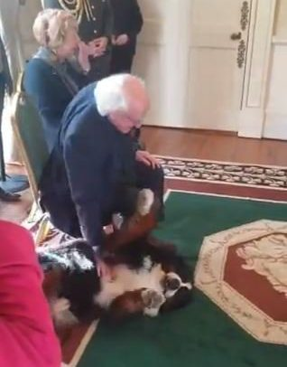 Irish President's dog refuses to leave his side unless it gets a belly rub (Picture: @malonebarry/Twitter)