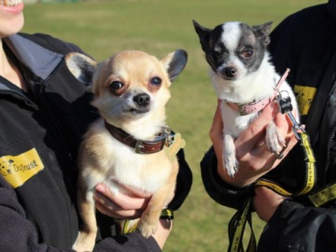 Dogs Trust is looking for a home for their smallest ever duo