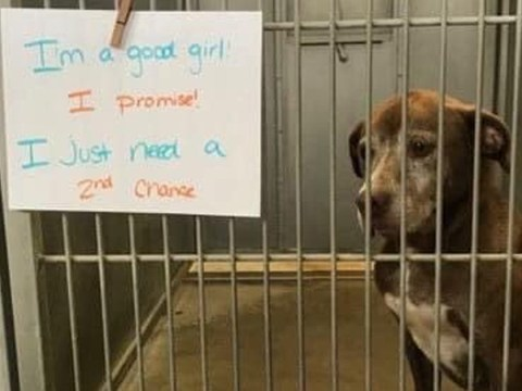 Dog who's been waiting for a home for seven years begs for a 'second chance'