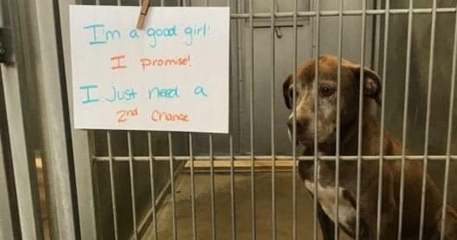Lonely dog waiting 7 years to find a home begs for a second chance