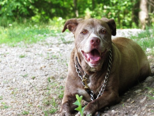Lonely dog waiting 7 years to find a home begs for a second chance Taken without permission https://www.petfinder.com/dog/ginger-41521869/mo/osage-beach/dogwood-animal-shelter-mo121/ Picture: PetFinder.com