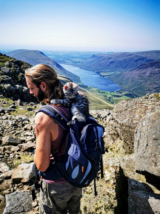 PIC BY @the.good.cat/MERCURY PRESS (PICTURED ARLO ENJOYS HIS FIRST WALK UP SCAFELL PIKE, LAKE DISTRICT) A cat that loves nothing more than going on hour-long dog walks with his canine pals leaves onlookers stunned as he takes on mountainous terrain on a lead. Maine Coon-Tabby cross, Arlo, is just nine months old but has been trekking around the countryside in his hometown of Halifax, West Yorks, since he was a kitten. His owners, Crissy Lister, 29, and Marc Shaw, 31, first discovered his love of the outdoors when they took him to Scafell Pike, in August last year, and have even set up an Instagram page for the fearless feline who joins their dogs, Lexi, a two year old Lurcher and Callie, a three year old Cavalier on their adventures across some of the countys most beautiful scenes. SEE MERCURY COPY.