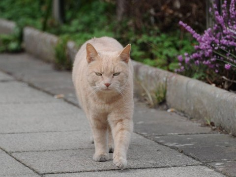 Yang the ginger cat is bringing cheer by visiting patients and staff at Hexham General Hospital every day