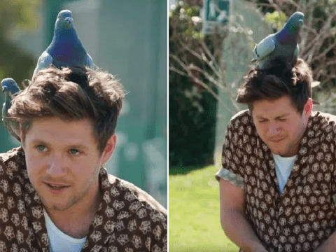Niall Horan gets pooed on by pigeon as he faces bird fears on Carpool Karaoke and it's everything
