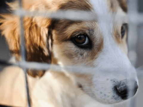 Shelters run out of stray dogs and cats as coronavirus makes adoptions rocket