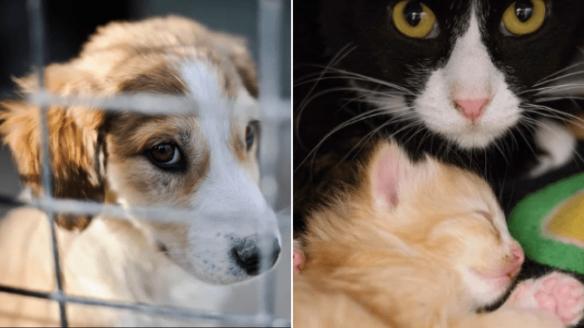 File photo of stray dog and stray cat with kitten