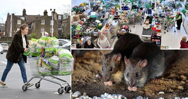 UK facing major rat problem because of coronavirus stockpiling and hoarding