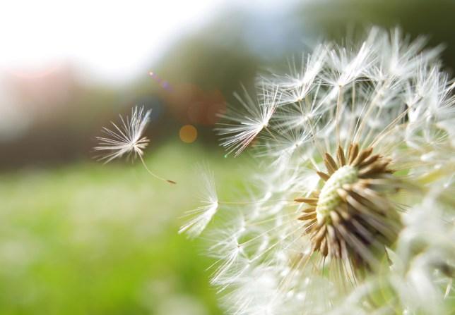 flower in a green field