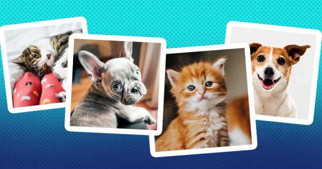 images of cute cats and dogs