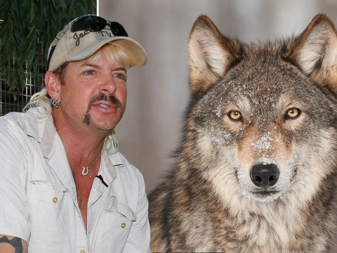 Tiger King's Joe Exotic wanted to become a 'wolf king' before his arrest in 2018