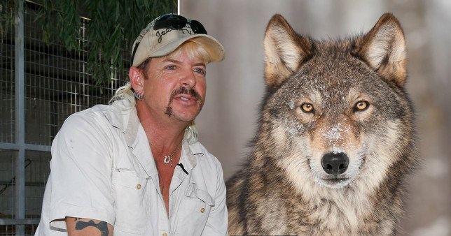 Joe Exotic wanted to be a wolf king