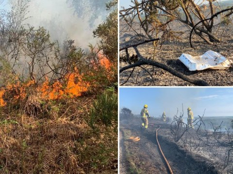 Huge forest fire after lockdown flouters used disposable barbecue