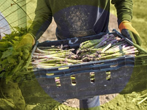 How furloughed workers can earn extra money AND help feed Britain