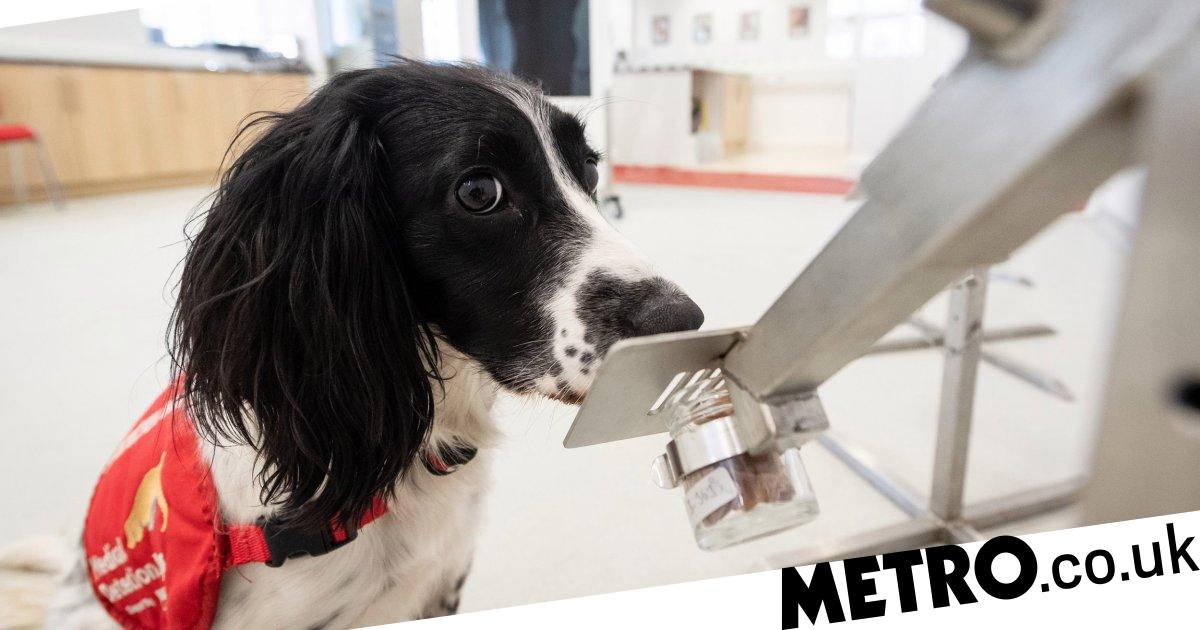 Dogs are chomping at the bit to go to airports to sniff out coronavirus