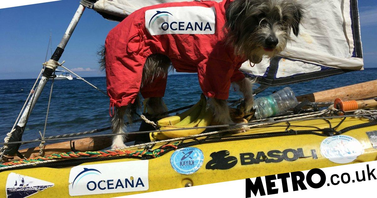 Kayaker rescues street dog while travelling through Italy and brings her aboard