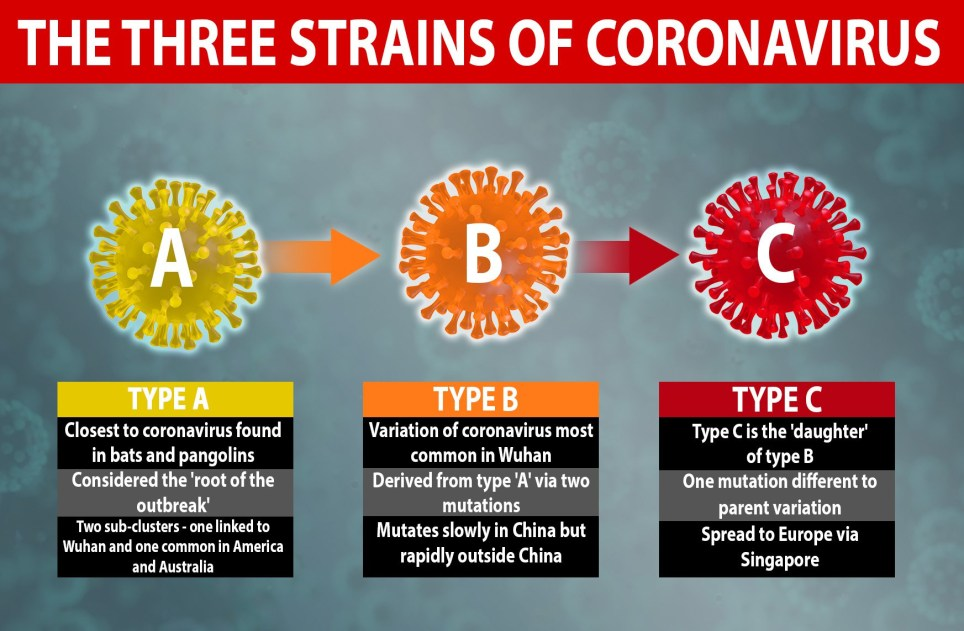 Coronavirus mutated into three distinct strains as it spread across the world