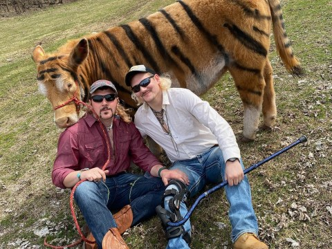 US farmers paint their cow to stage Tiger King photos
