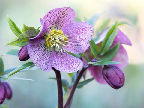 Can you still buy flowers and plants from the Chelsea Flower Show online?