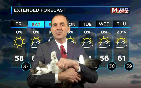 Cat interrupts weather forecast, becomes star of the show. Jeff Lyons cat Betty.