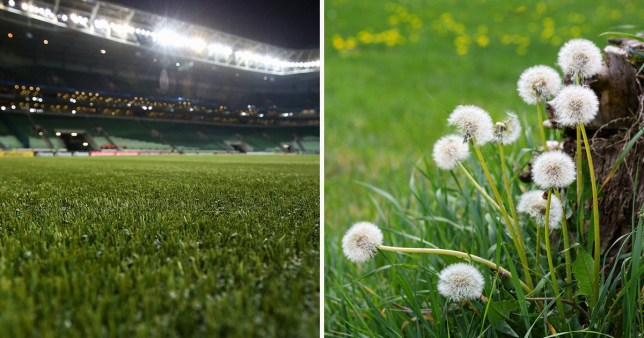 Why do so many people have fake grass and how bad is it for the birds and bees?